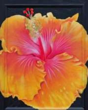 Hibiscus de collection