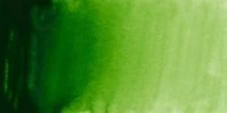Sap green W534