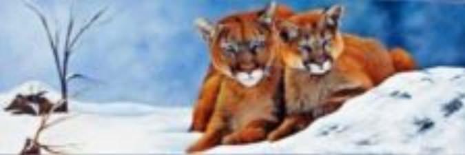 Les cougars du Canada