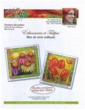 Echinaceas et tulipes