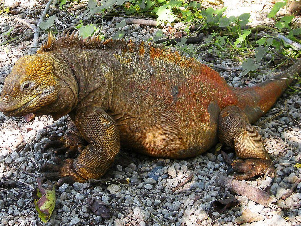 Îles Galapagos (Équateur)